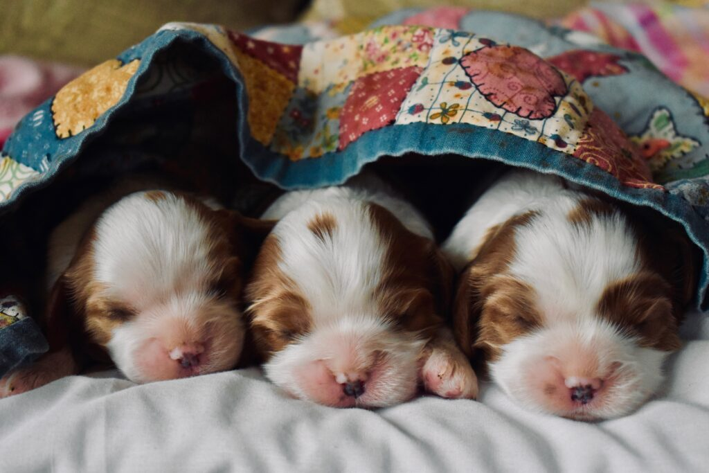a photo of cute puppies in a blanket